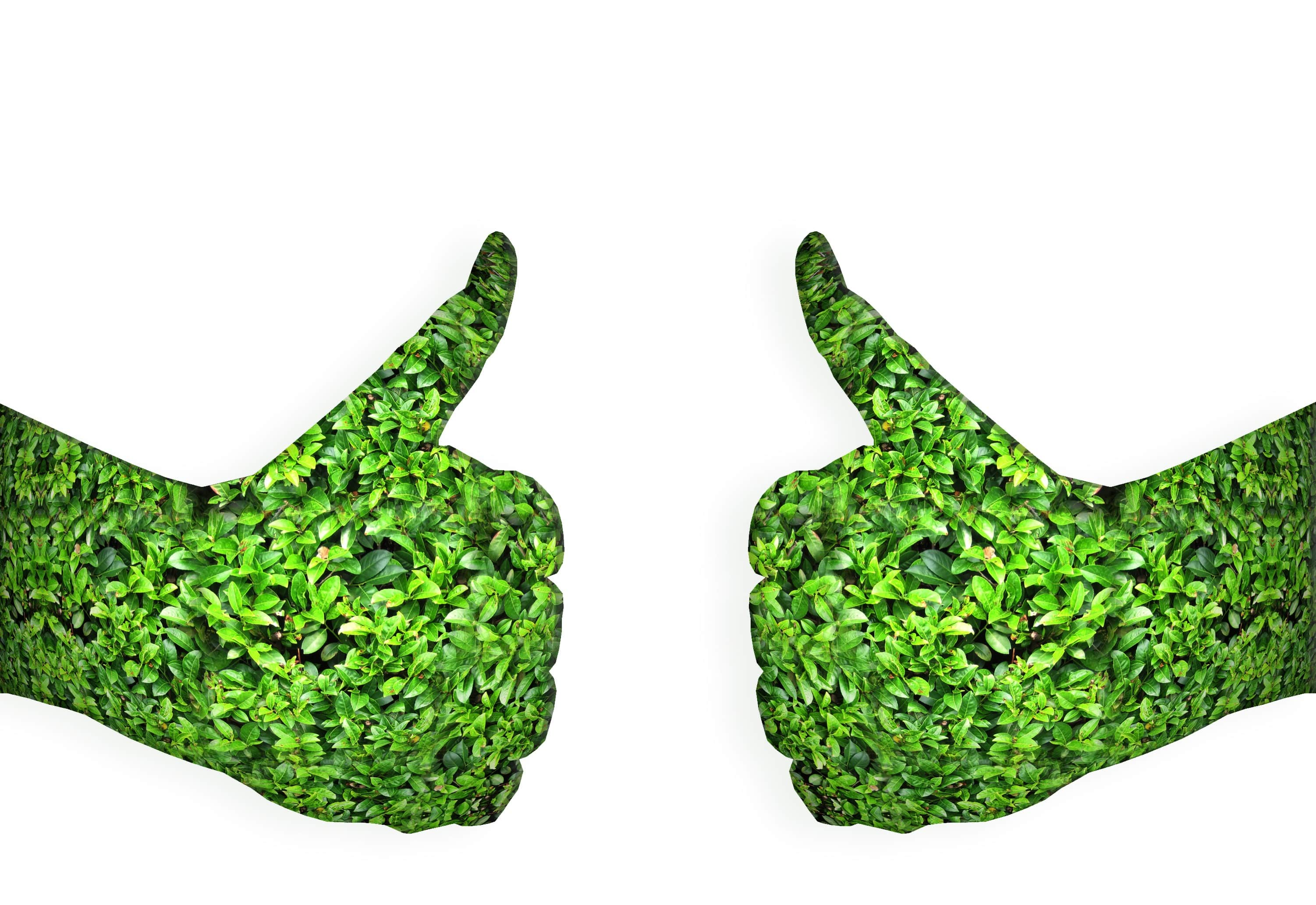 "the importance of going green Going green at work is no longer an unusual idea in fact, companies of all sizes are getting on the ""sustainability"" bandwagon by making small changes in your office, you can improve your image, save lots of dough and attract eco- conscious customers."